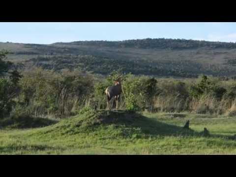 Kenya Maasai Mara National Park Ennio 2014