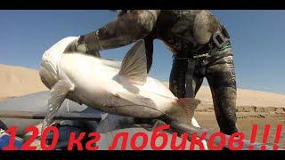 Бешеный Ход Толстолобика Волгоград Июнь лобики весом 42 31 25 22 20кг Подводная Охота 2020