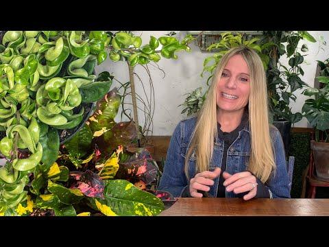 Houseplant Pests:  Get Rid of Them Organically!