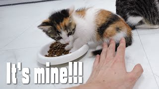 The Kitten Gets Very Angry and Yells At Me When I Touch Her