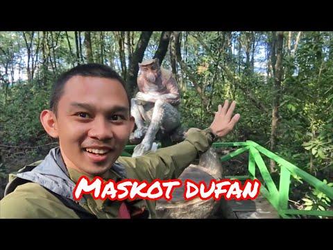 bekantan-maskot-dufan-di-hutan-mangrove-tarakan-kalimantan-🐒
