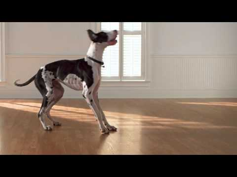 Pergo Floors Commercial Youtube