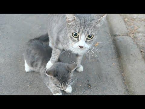 Kitten loves his mom, but she doesn't love him back