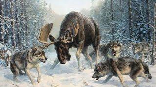 Охота на лося с лайкой в Сибири кулемки