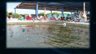 Licenciatura en Biología Marina | UADY
