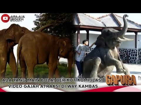 VIDEO LANGKA! GAJAH KAWIN TERTANGKAP KAMERA! - GAPURA