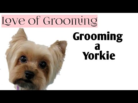 Summer Style on a Yorkie