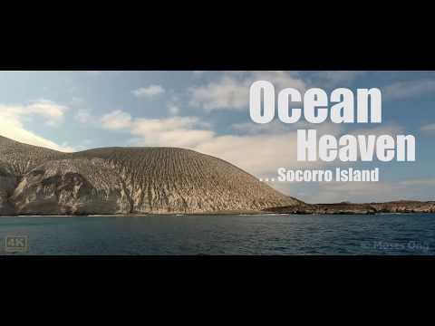 Ocean Heaven - Socorro Island (4K)