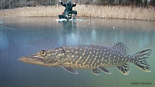 Зимняя рыбалка 2019 - 2020. Ловля на жерлицы и мормышку. Рыбалка на щуку