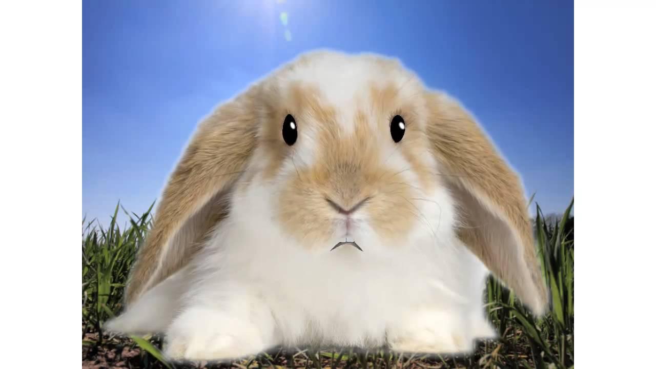 Raising Meat Pen Rabbits   YouTube