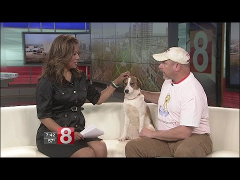 Deciding To Adopt A Pet With Pack Leaders Rescue Of CT