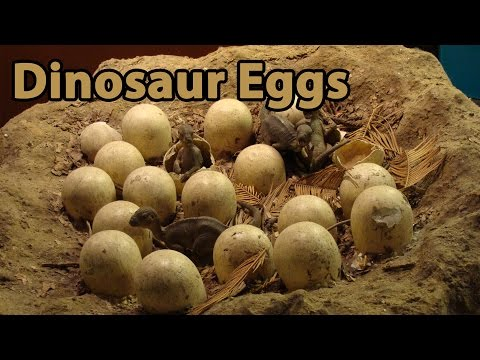 Dinosaur Eggs & Babies - Full Program