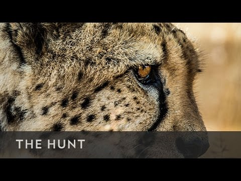 The Hunt - S01E02 - In the Grip of the Seasons (Arctic)