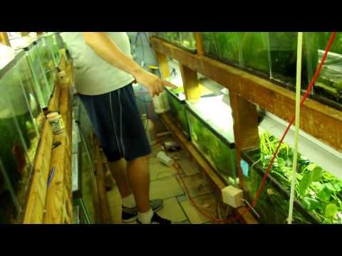 Dave Stewart's Fish Room