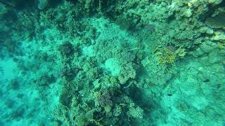Египет 2020 Snorkeling Reefs Sharks bay Red sea Egypt