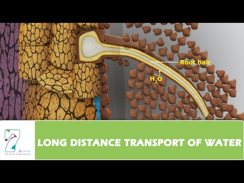 LONG DISTANCE TRANSPORT OF WATER_PART 01
