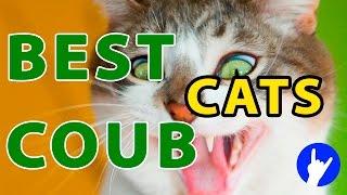 Best Cat Coubs #1 Лучшие кото Coub'ы 2015