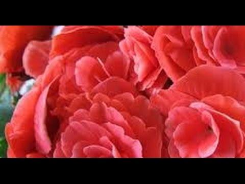 Telemensagem De Aniversário De Nora Ao Sogro Ou Sogra Tf227 Youtube