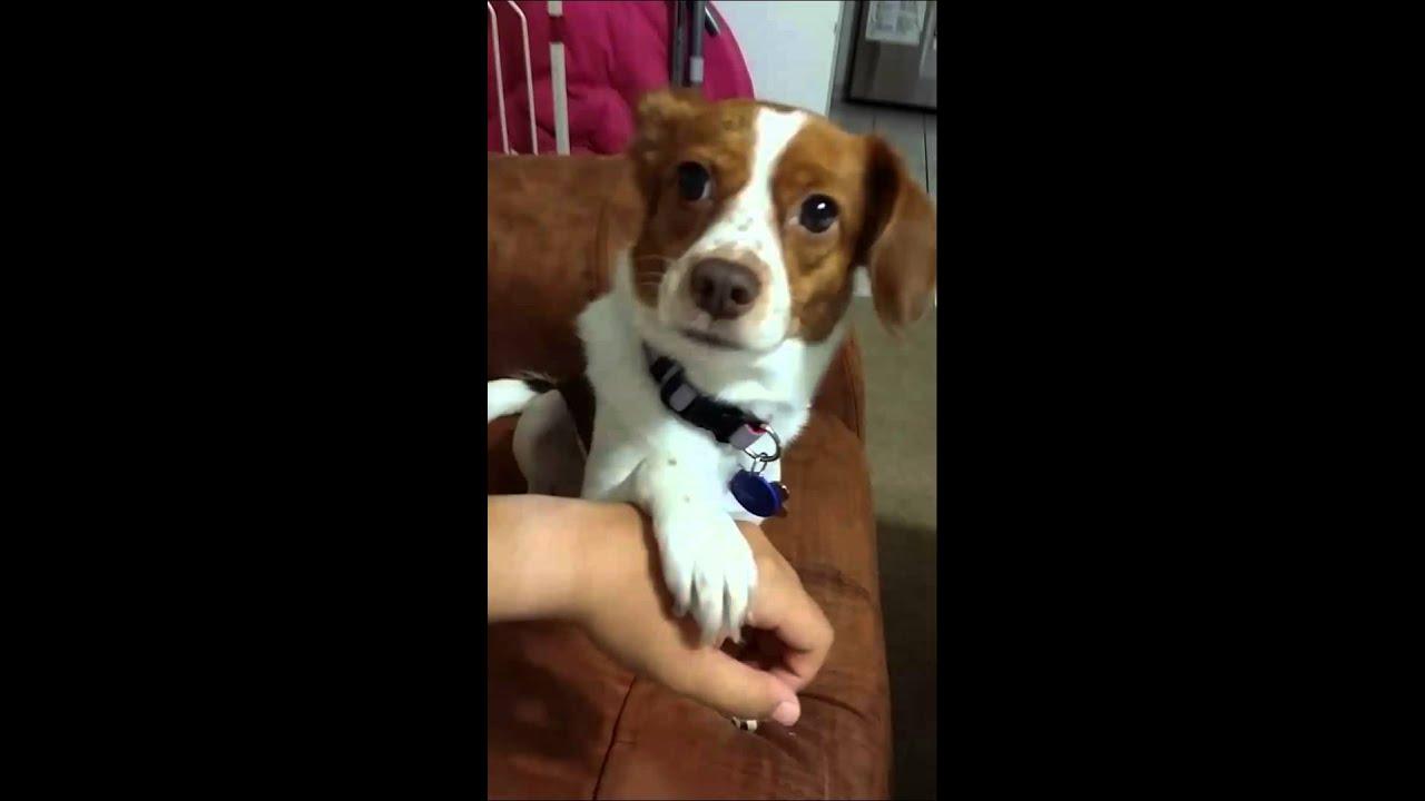 Hasil gambar untuk dog holding hand