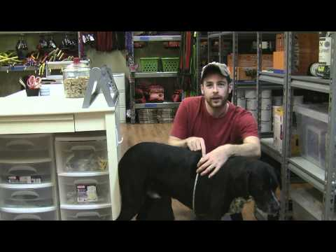 How To Size Your Dog For A Dog Harness, Coat, Vest, Packs, Apparel