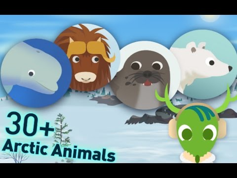 Baby Learn The Animals in Arctic Land - MarcoPolo Arctic