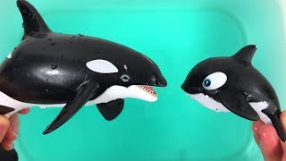 Best Friend Dinosaur Help Orca Mom Find her Baby - Learn Sea Animals for Kids