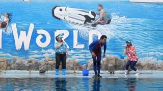 Safari World Bangkok Dolphin Show in HD