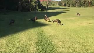 Callie Calling Turkeys - HNS Outdoors, LLC   HNSOutdoors