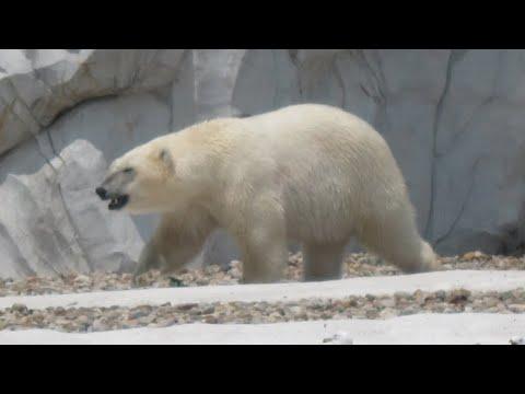Detroit Zoo, Royal Oak, Michigan, United States, North America