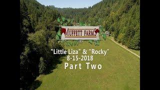 9-15-2018 - Part Two - Little Liza & Feel Like A Rockstar Goldset: 10 AKC Irish Setters