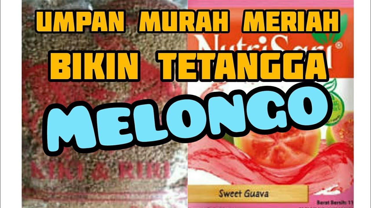 Umpan Pelet Kiki Riri Dan Nutrisari Sweet Guava Bikin Tetangga Melongo Youtube