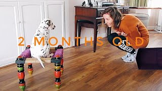 NEW LIFE WITH OUR DALMATIAN PUPPY | RH Vlog