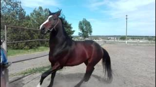 продажа лошадей 2
