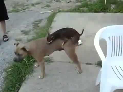 Sexo animal ( VIDEO 2015 )