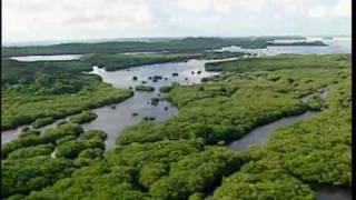 Les Iles Palaos.mpg