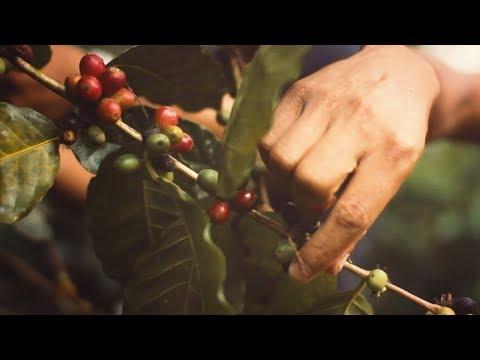 La Tazza d'oro - Il nostro caffè, un viaggio nel gusto