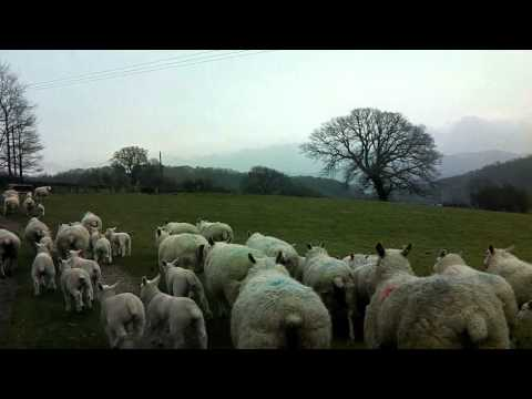 The Welsh Countryside  -  Denbighshire