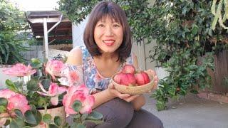 Bí quyết trồng cây có trái trĩu cành, trồng rau cải xanh tốt
