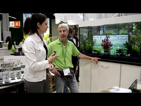Macenauer TV - Nové akvarijní rostliny Dennerle (CZ titulky)