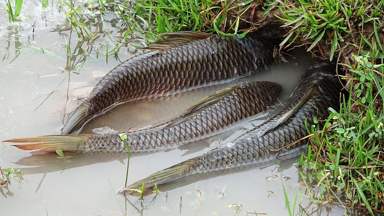 Cool!!! Unique fishing skill in flood season by fish hunter guy