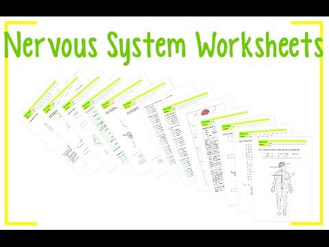 Worksheets Nervous System - YouTube