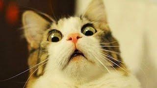 СМЕШНЫЕ ЖИВОТНЫЕ ЛУЧШИЕ ПРИКОЛЫ 2020 Смешные видео Смешные коты приколы с котами до слез 13