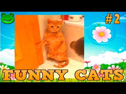 Best Funny Cats Compilation Funny Cat Videos #2 Прикольные Смешные коты