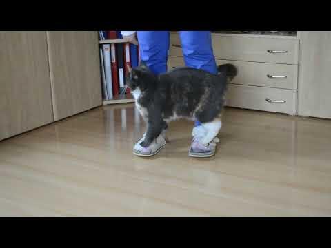 Suki - cat tricks February 2018