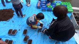 春たんぼに配布するカブトムシの幼虫を、片上幼稚園の園児が箱詰めして...