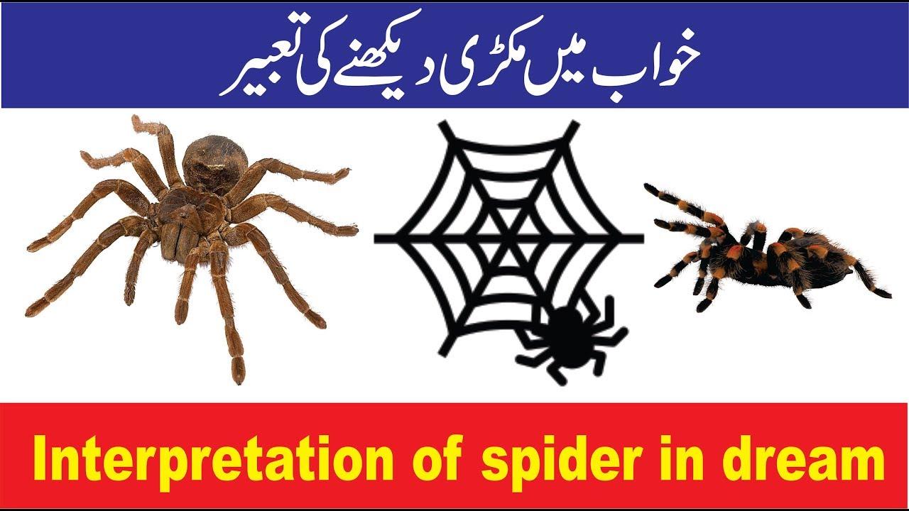 Dream Interpretation: Spider in a dream 7