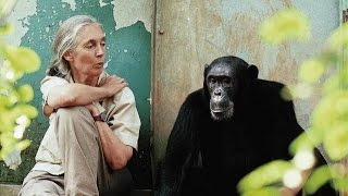 Repeat youtube video Dr. Jane Goodall: Reasons for Hope