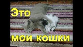 Кадры из жизни моих питомцев кота Ричарда и кошки Люси.