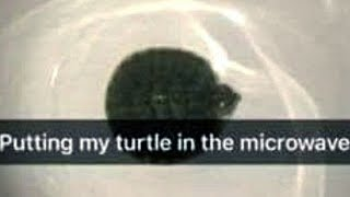 Teen Tries To Microwave Her Pet Turtle