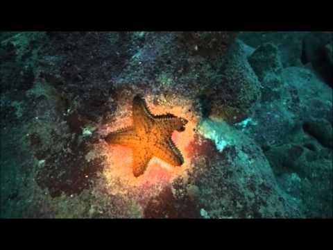Scuba diving, Roatán Honduras